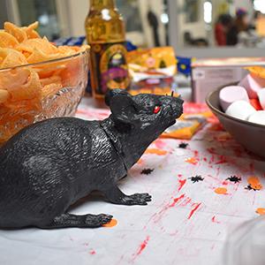 Rat Halloween 2019 Adiona
